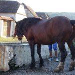 Riding behind a tall wind-screen - Transylvania's hidden villages 23